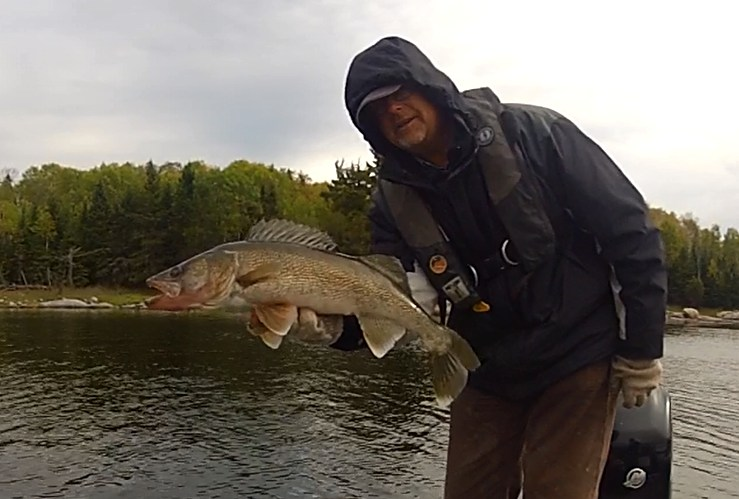 28 3/4 inch Walleye
